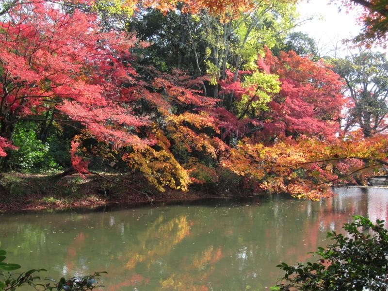 植物園 紅葉の盛り_e0048413_18450448.jpg
