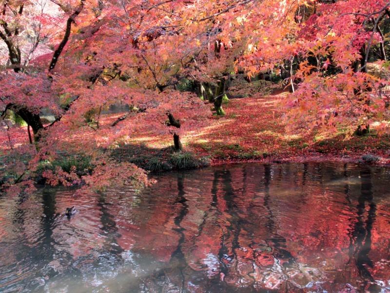 植物園 紅葉の盛り_e0048413_18451833.jpg