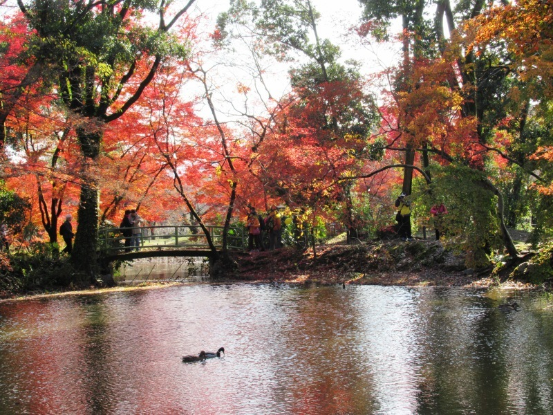 植物園 紅葉の盛り_e0048413_18454440.jpg