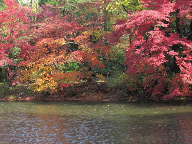 植物園 紅葉の盛り_e0048413_18460277.jpg