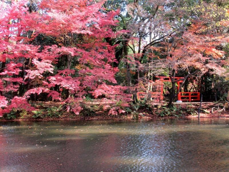 植物園 紅葉の盛り_e0048413_18461706.jpg