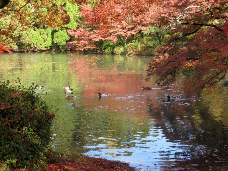植物園 紅葉の盛り_e0048413_18462711.jpg