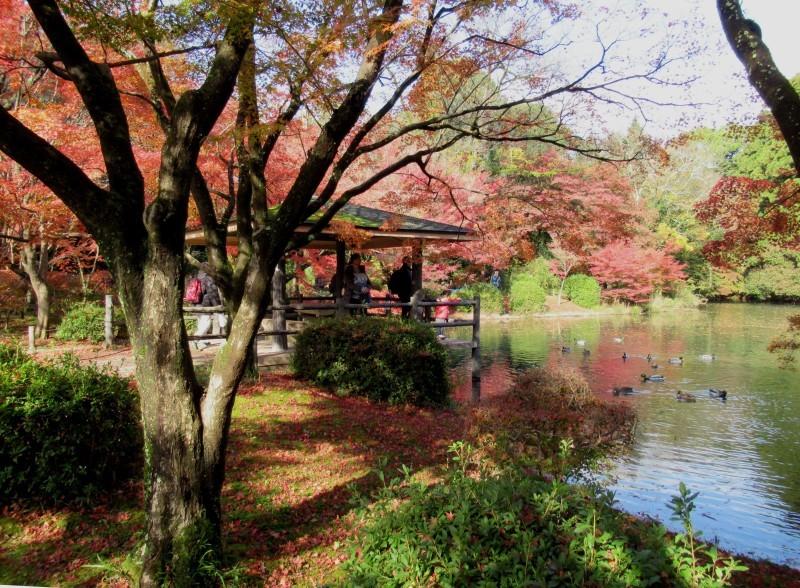 植物園 紅葉の盛り_e0048413_18463962.jpg