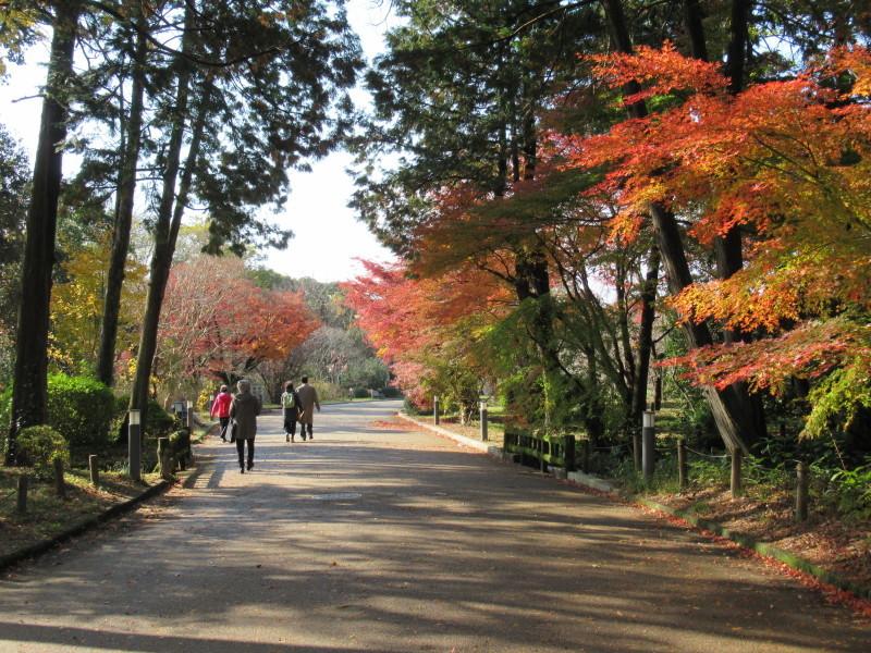 植物園 紅葉の盛り_e0048413_18464965.jpg
