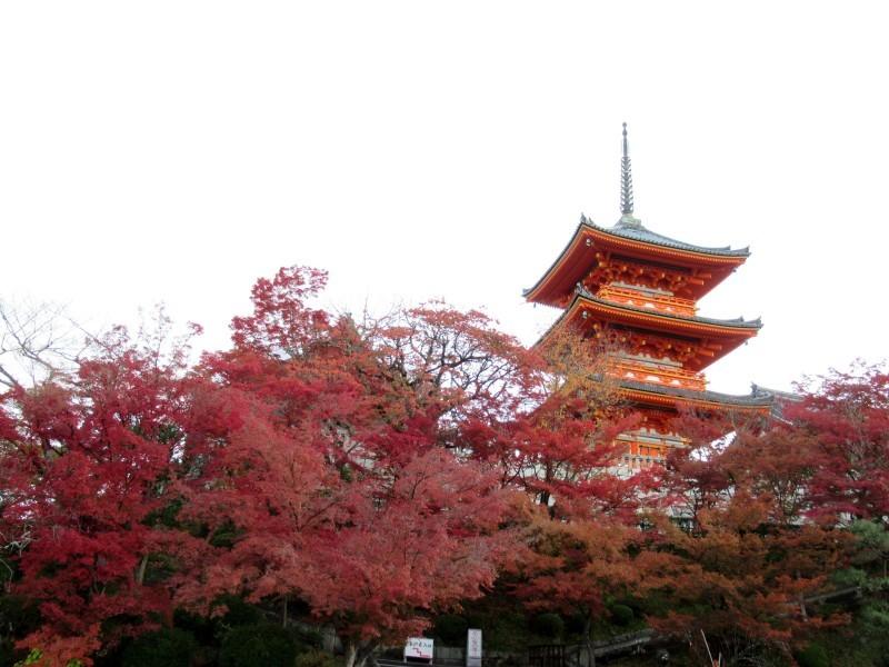 清水寺は盛りです_e0048413_20413353.jpg