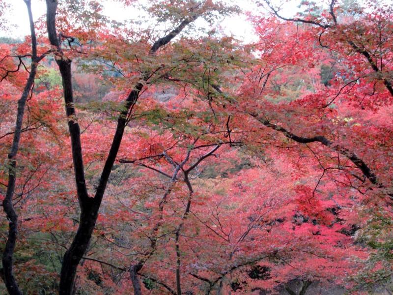 清水寺は盛りです_e0048413_20415610.jpg