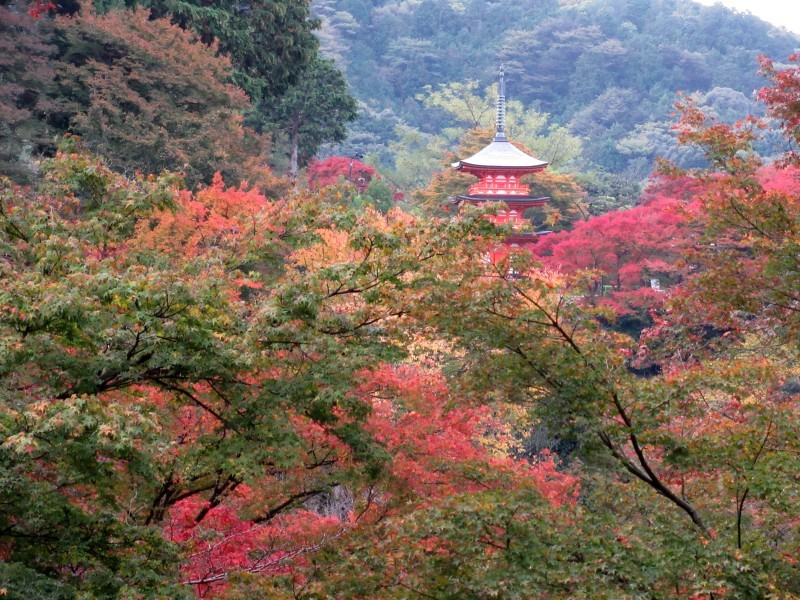 清水寺は盛りです_e0048413_20422021.jpg