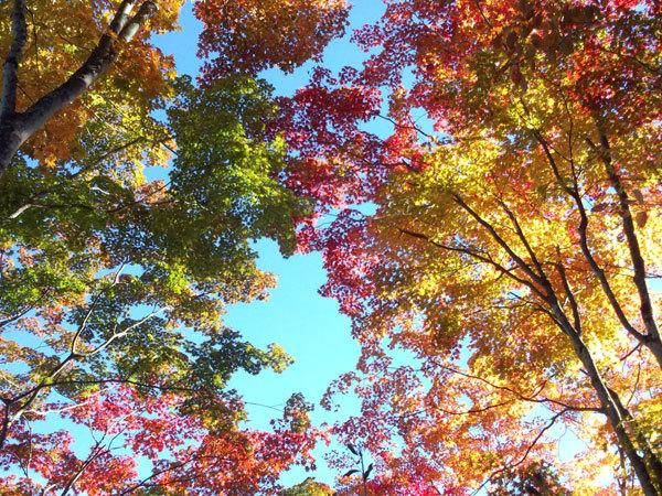 軽井沢の秋や冬_d0035921_14195566.jpg