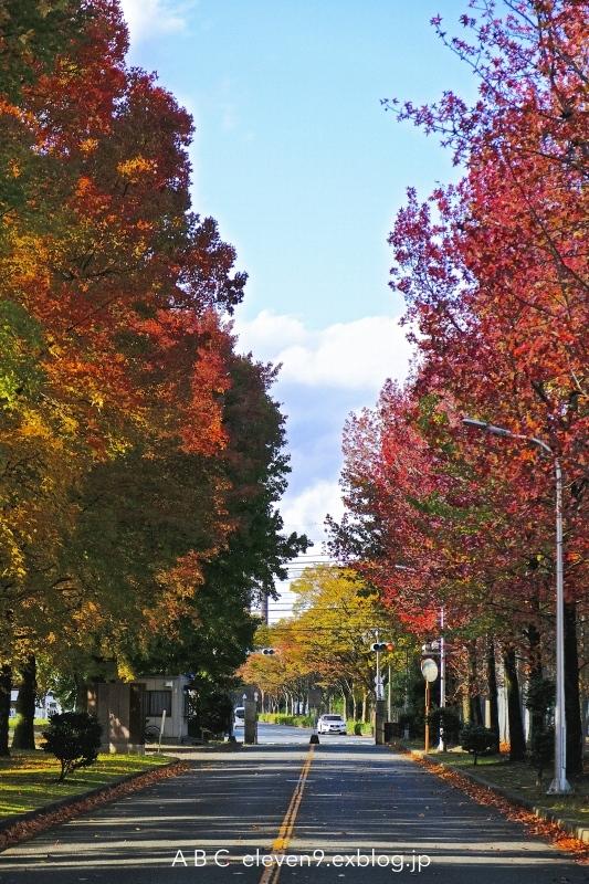 campus_f0315034_18234362.jpg