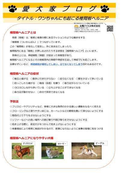 愛犬家住宅 太陽ハウス 松戸_c0064859_18362225.jpg