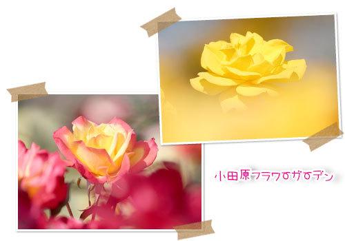b0024183_16545667.jpg