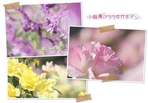 b0024183_16545907.jpg