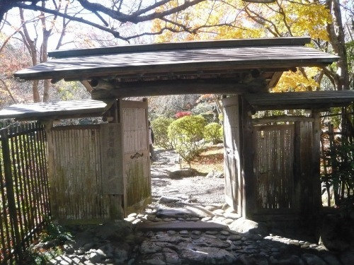 ポタリング 青梅の紅葉・臨川庭園_a0262093_12302554.jpg