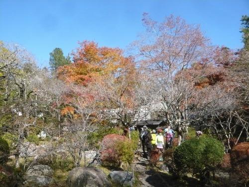 ポタリング 青梅の紅葉・臨川庭園_a0262093_12415320.jpg