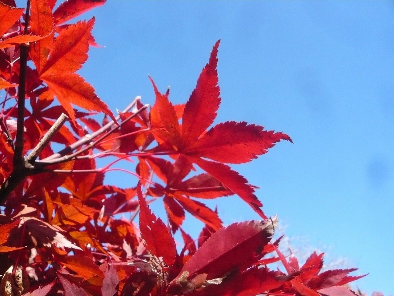 ポタリング 青梅の紅葉・臨川庭園_a0262093_12451032.jpg
