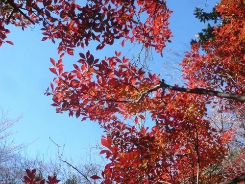 ポタリング 青梅の紅葉・臨川庭園_a0262093_12453971.jpg