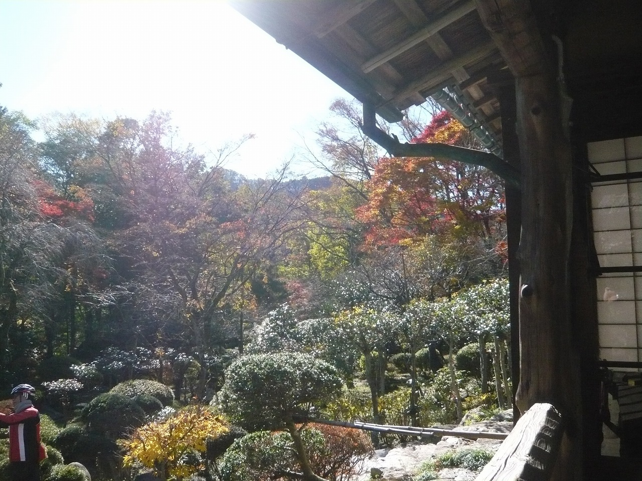 ポタリング 青梅の紅葉・臨川庭園_a0262093_12490961.jpg