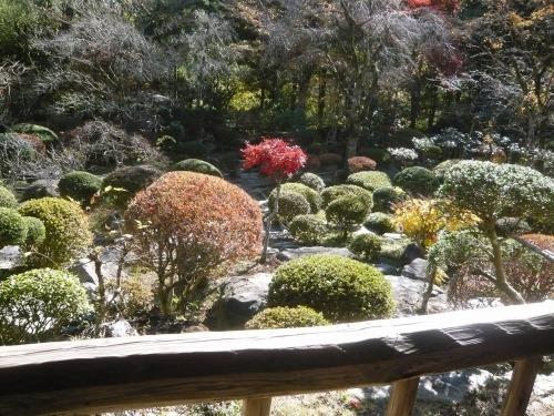 ポタリング 青梅の紅葉・臨川庭園_a0262093_12493973.jpg