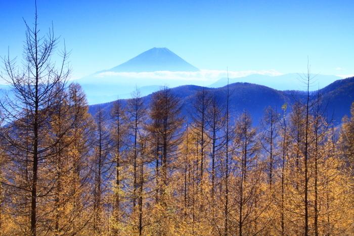 29年11月の富士(19)池の茶屋林道の富士_e0344396_15012703.jpg