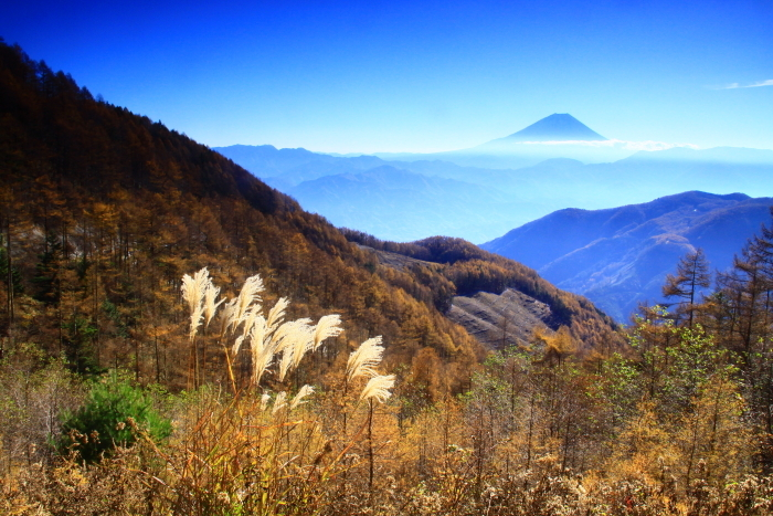 29年11月の富士(19)池の茶屋林道の富士_e0344396_15014591.jpg