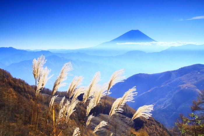 29年11月の富士(19)池の茶屋林道の富士_e0344396_15015234.jpg