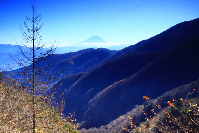 29年11月の富士(19)池の茶屋林道の富士_e0344396_15020089.jpg