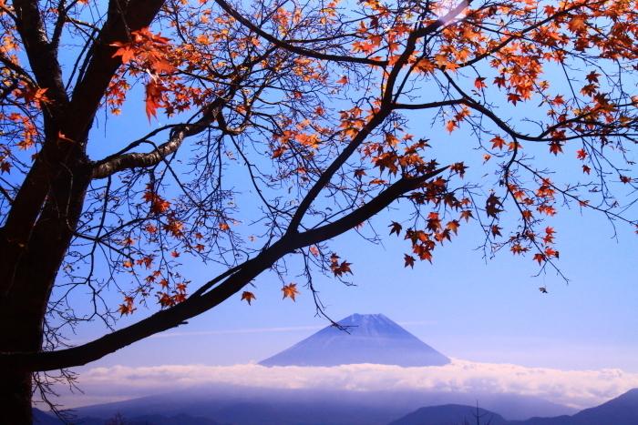 29年11月の富士(19)池の茶屋林道の富士_e0344396_15020804.jpg