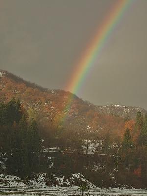 兼業農家の雪囲いに虹が!_c0336902_18494205.jpg