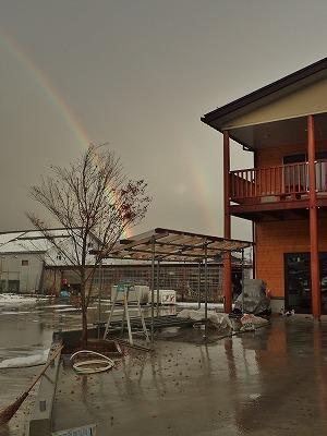 兼業農家の雪囲いに虹が!_c0336902_18494618.jpg