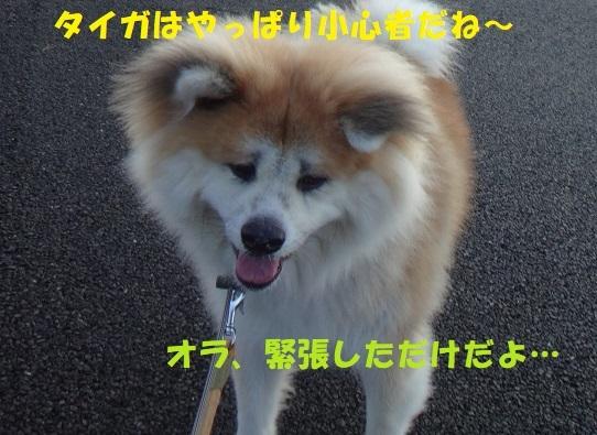 f0121712_09053815.jpg