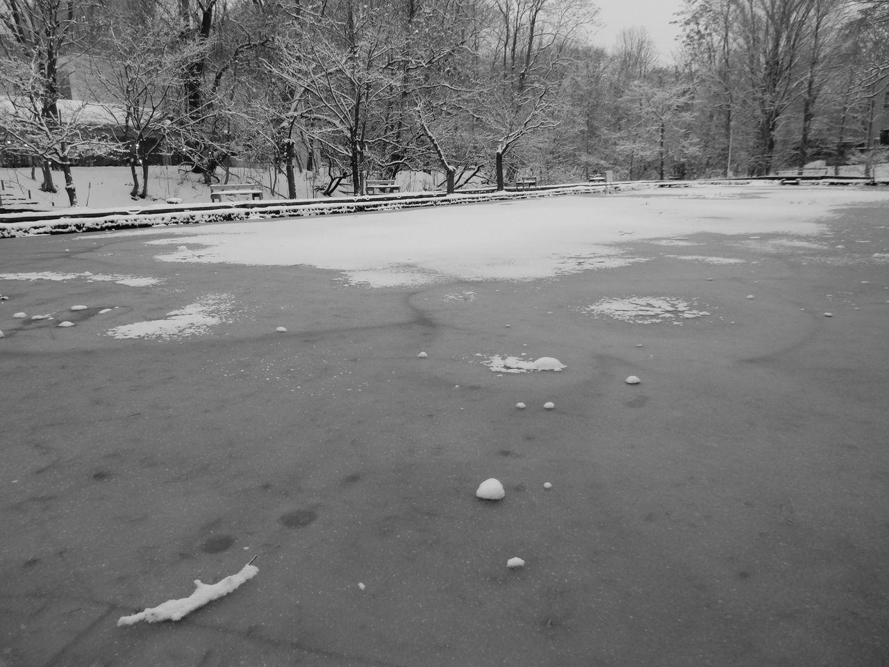 冬景色のキャンパス_c0025115_21441781.jpg