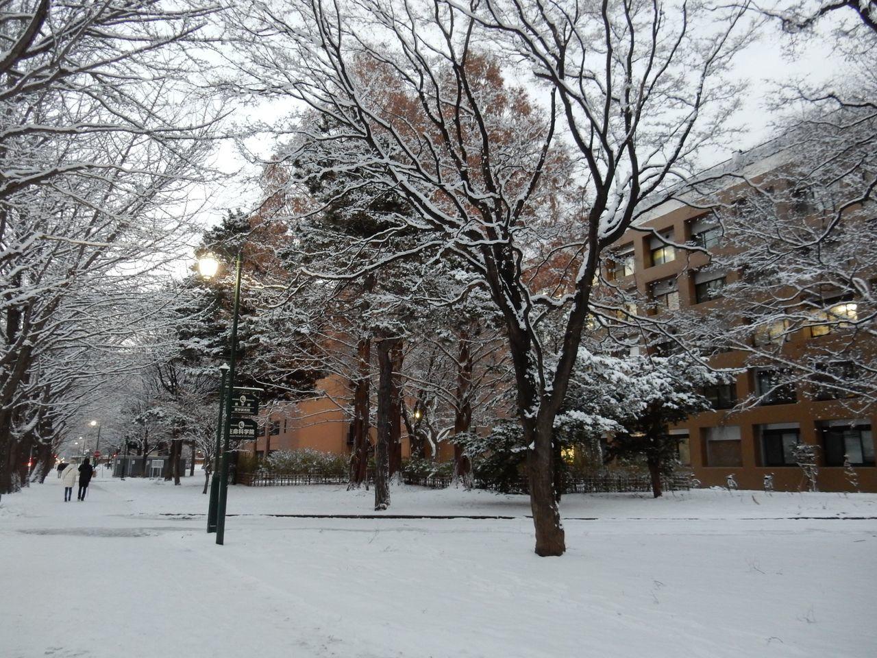 冬景色のキャンパス_c0025115_21443934.jpg
