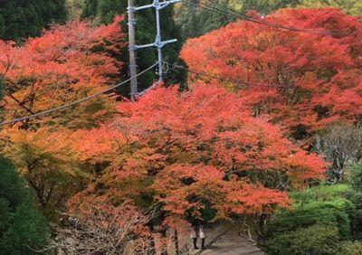 今の紅葉はこんな感じでーす_e0234016_19545072.jpg