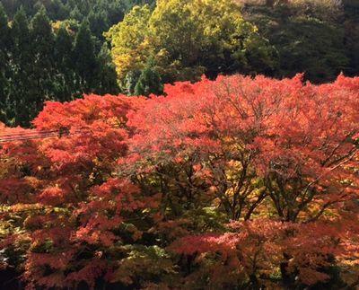 今の紅葉はこんな感じでーす_e0234016_19554681.jpg