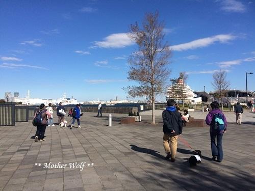 第23回マザーウルフ遠足 横浜レポート_e0191026_15521000.jpg
