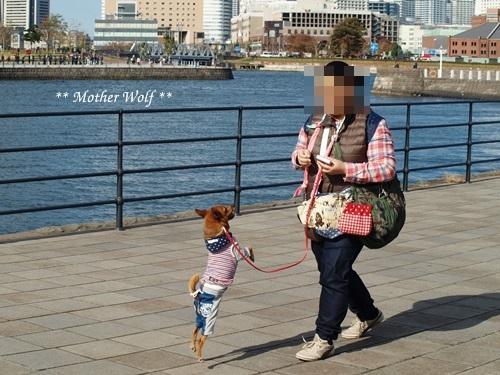 第23回マザーウルフ遠足 横浜レポート_e0191026_17125545.jpg