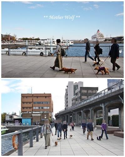 第23回マザーウルフ遠足 横浜レポート_e0191026_17404760.jpg