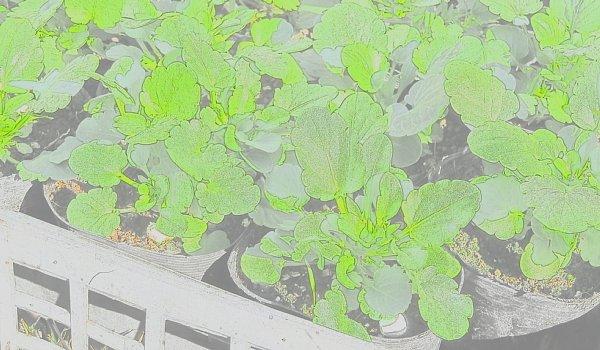 2017年11月26日 春花壇の準備 ④_b0341140_13184699.jpg