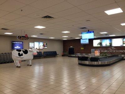 シャーロットタウン空港では牛がお出迎え_c0353373_00315036.jpg