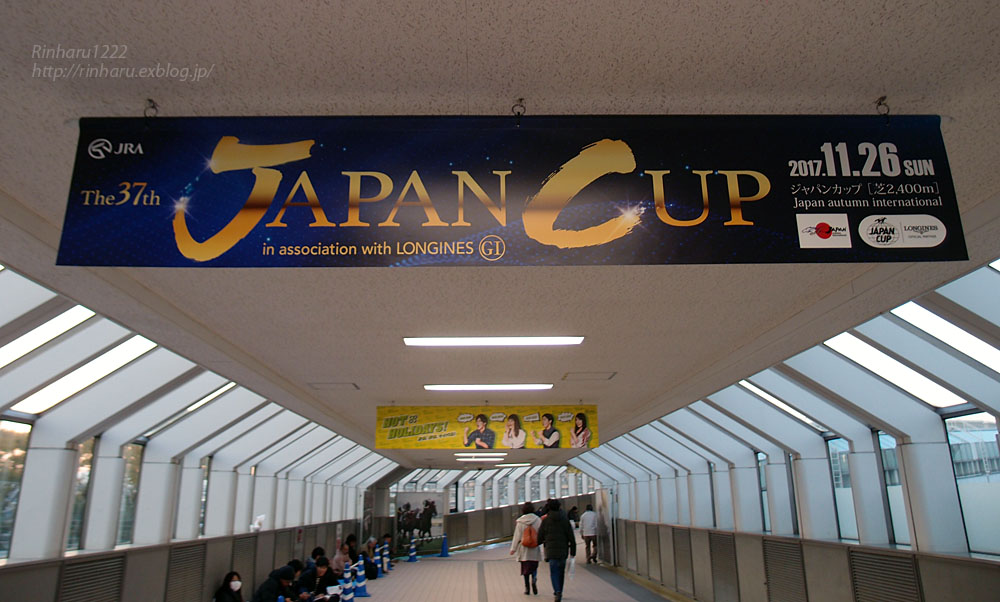 2017.11.25 ディサイファ様応援グッズ@ジャパンカップ前日_f0250322_2182468.jpg