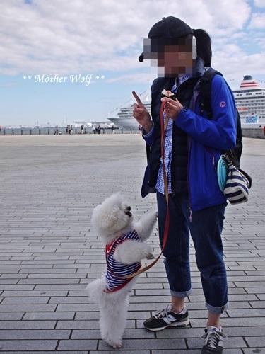 第23回マザーウルフ遠足 横浜レポート_e0191026_21173300.jpg