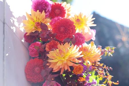秋の装花 シェ松尾松濤レストラン様へ ダリア、生命の色_a0042928_17401618.jpg
