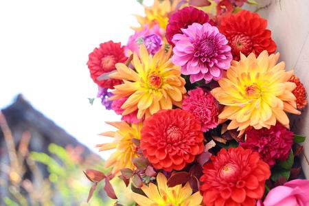 秋の装花 シェ松尾松濤レストラン様へ ダリア、生命の色_a0042928_1740244.jpg
