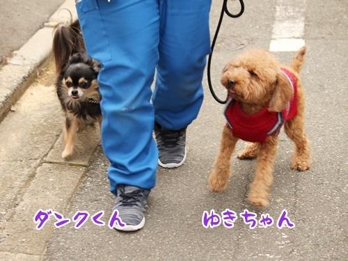 お散歩ウォッチング♪_f0357682_15320400.jpg