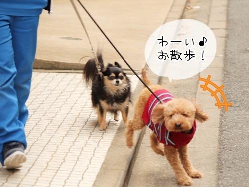 お散歩ウォッチング♪_f0357682_15342984.jpg