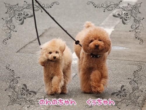 お散歩ウォッチング♪_f0357682_15425231.jpg
