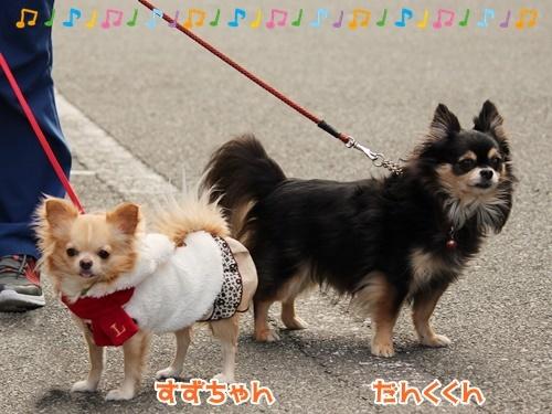 お散歩ウォッチング♪_f0357682_15425292.jpg
