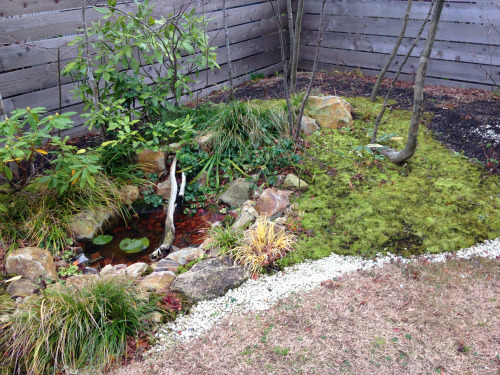 RealZEH・Q1住宅モデル能代:庭の苔_e0054299_17201192.jpg