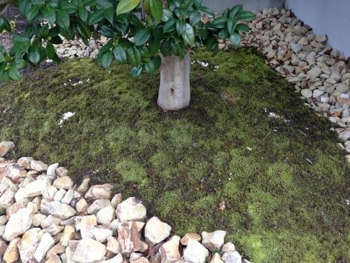 RealZEH・Q1住宅モデル能代:庭の苔_e0054299_17255225.jpg