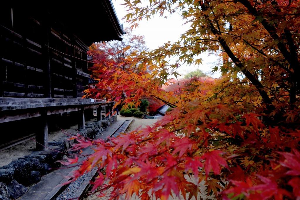 【大阪】大威徳寺_c0348200_00475578.jpg